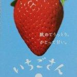 佐賀県の「いちごさん」を買ってみました|20年ぶりの新作イチゴ